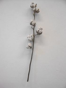 http://christinelewisart.com/files/gimgs/th-22_edited cotton.jpg